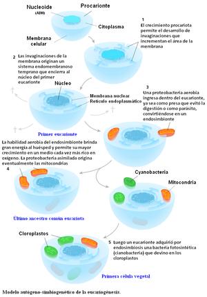 Origen_eucariota