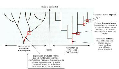 teoria-sintetica-vs-eq-puntuado