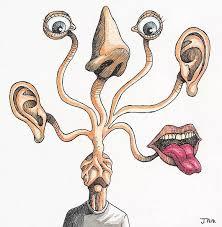 sentidos y cerebro