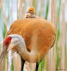 Amor maternal