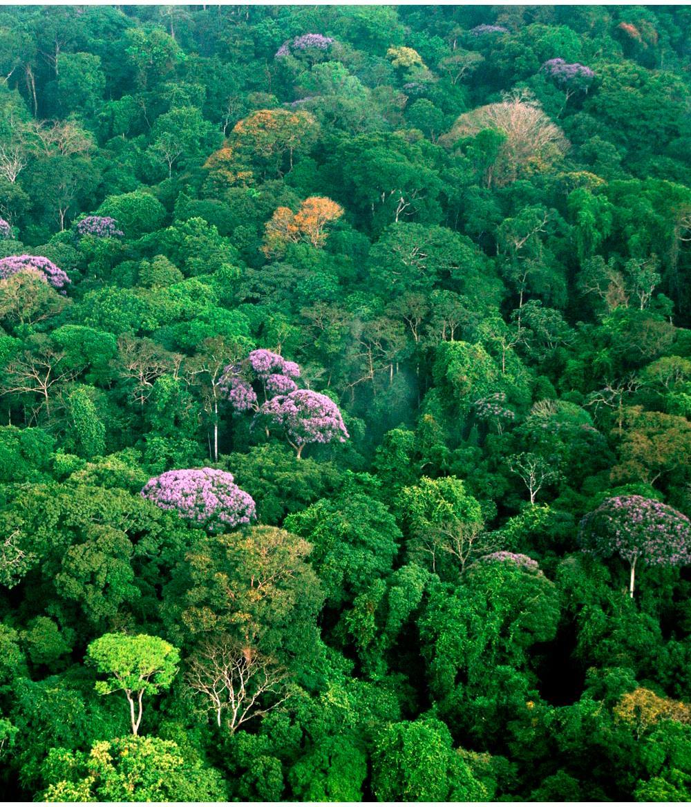 selva macrotermica