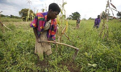agricultura en Africa