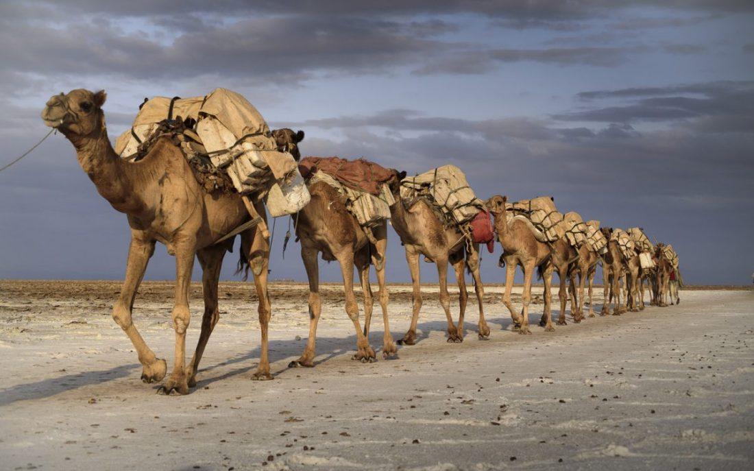 carabana camellos
