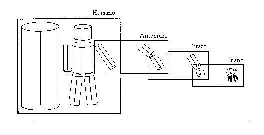 Brazo humano
