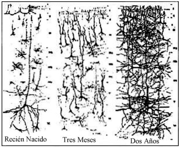 Desarrollo de las conexiones