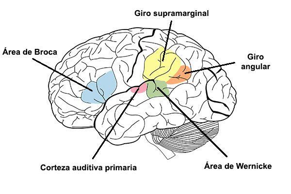 giro-angular-broca-wernicke