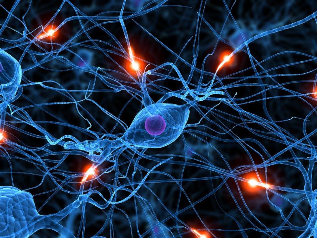 sinapsis de arbol de neuronas